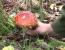 intoxicati ciuperci