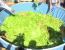 salata uriasa