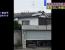 cutemur Japonia