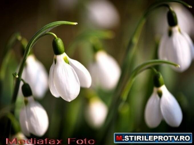 flori de primavara - 1