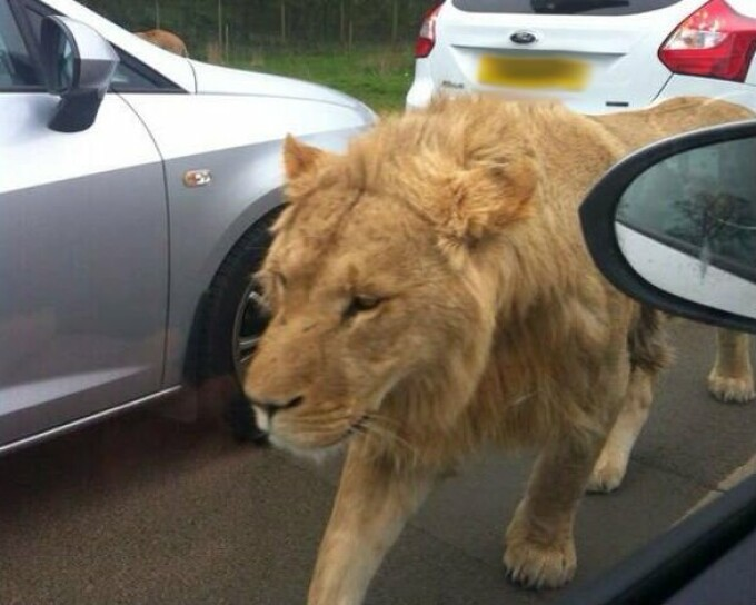 Leu in Nairobi