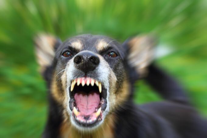Femeie desfigurată de un câine