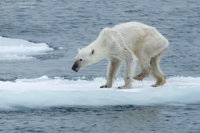 urs polar chinuit