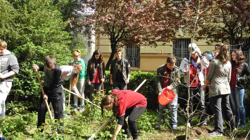 Pomi fructiferi in loc de plante ornamentale, in parcurile scolilor din Arad. Peste 800 de meri vor fi plantati