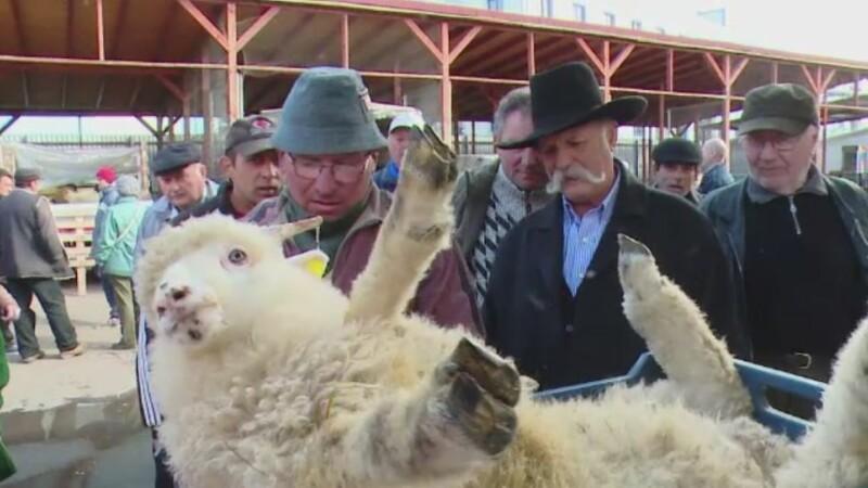 Patru zile pana la Pastele catolic. Cat a ajuns sa coste un kilogram de carne de miel in pietele din Romania
