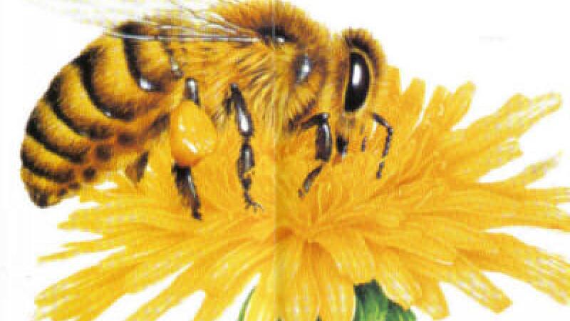 Calculati distanta parcursa de albina in gradina cu flori. Problema de nota 10, la Testele Nationale