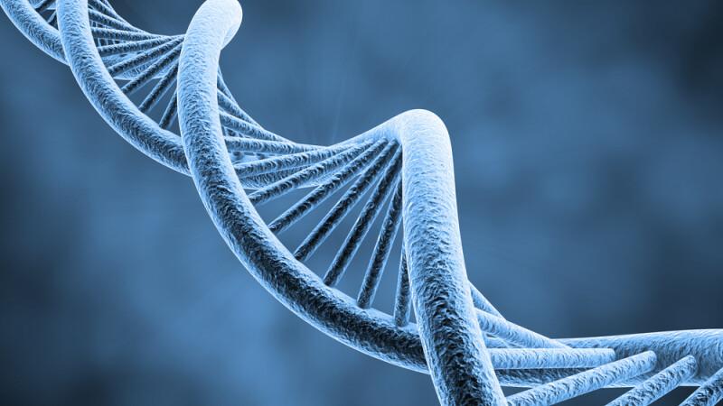 Virusuri ale omului de Neanderthal, regasite in ADN-ul uman modern - studiu