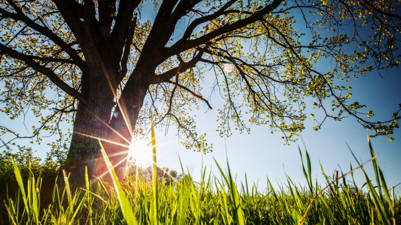 Soare si temperaturi ridicate in acest weekend in toata tara. Ploile se intorc saptamana viitoare