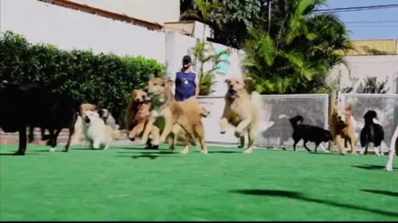 Tara unde cainii au parte de petreceri si piscine speciale.