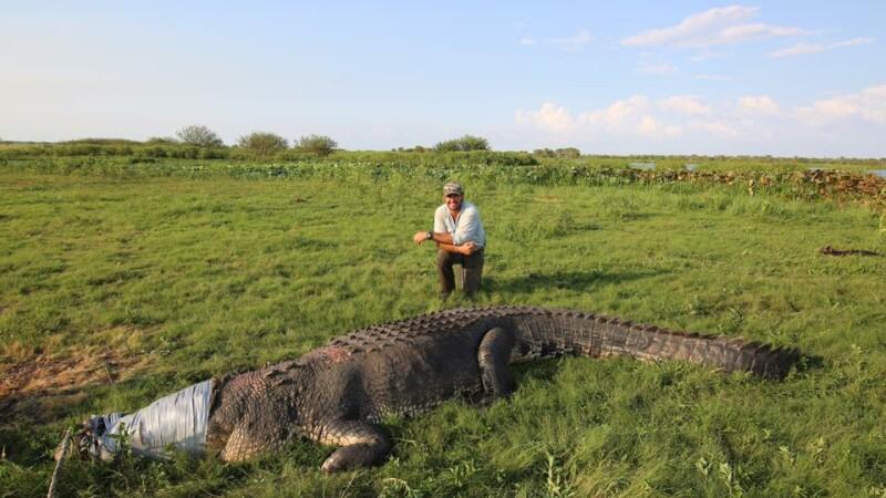 Un australian a înfășurat gura unui crocodil cu bandă. Ce a urmat