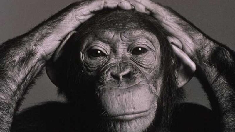 Cimpanzeii sunt capabili sa comita actiuni in mod premeditat