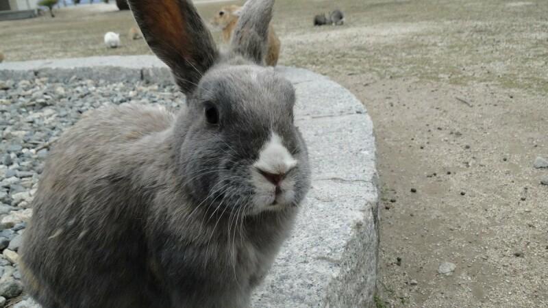 Insula populata in totalitate de iepuri. Povestea macabra care a tinut vizitatorii departe dupa razboi