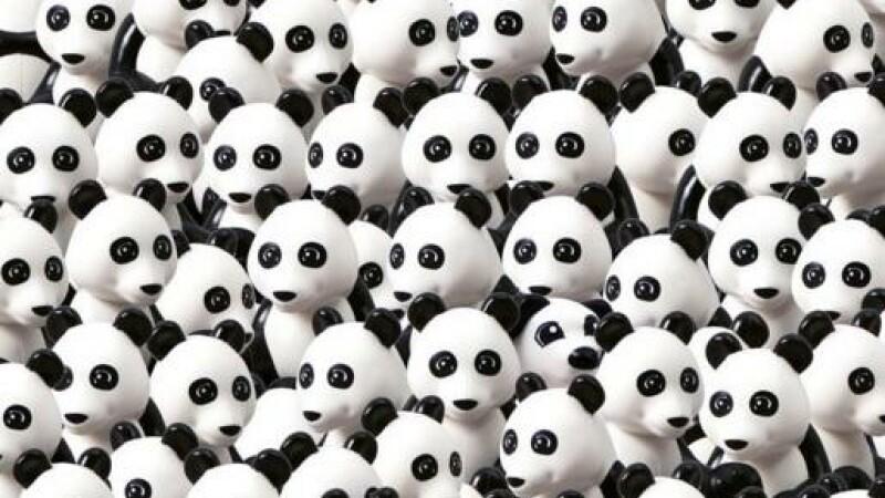 Puzzle: Cat timp iti ia sa gasesti cainele ascuns printre ursii panda din imaginea alaturata?