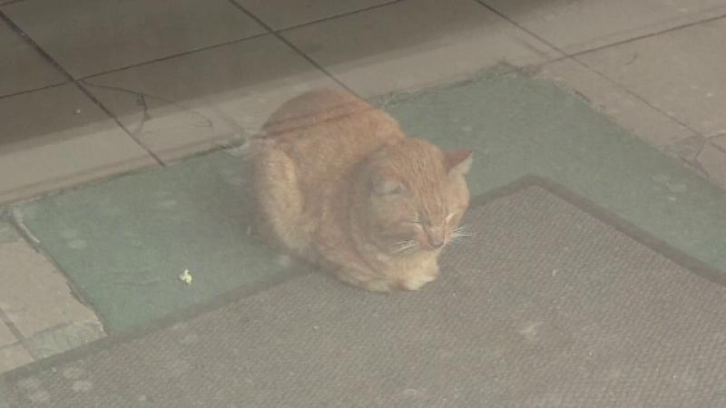 Video de prietenul lui targu mures de strada george cosbuc - 1 part 4