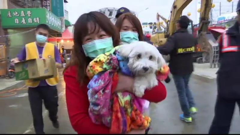 Caine salvat dintre daramaturi, la cinci zile dupa cutremurul din Taiwan. Stapanii l-au recuperat dupa ce l-au vazut la TV