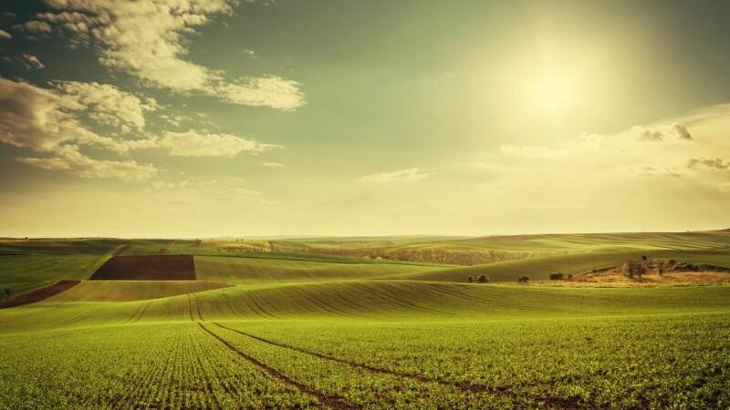 Legume si fructe rezistente la frig si seceta. Cercetatorii romani pregatesc agricultura viitorului, insa au o mare problema