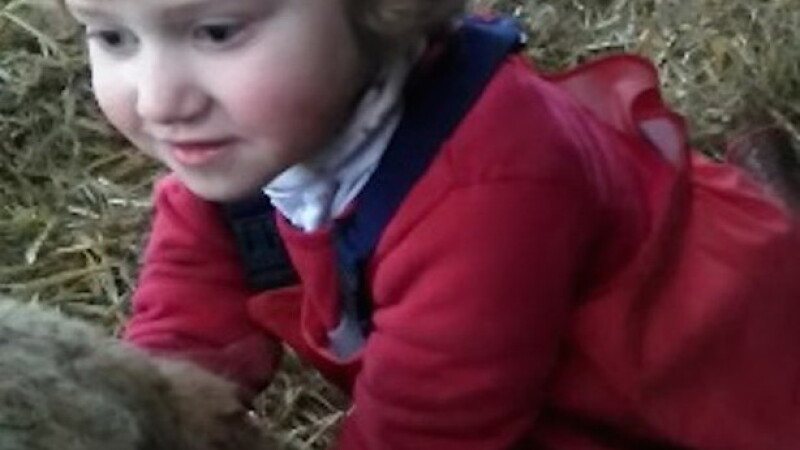 Momentul in care o fetita de 3 ani ajuta o oaie sa nasca un miel sanatos, sub indrumarea mamei sale. VIDEO