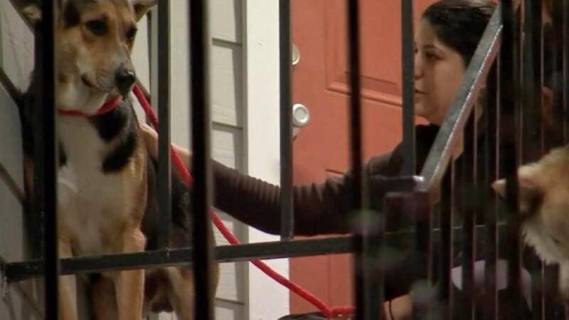 Un caine loial si-a asteptat zilnic, in acelasi loc, stapanul care murise. Ce au descoperit oamenii cand s-au apropiat de el