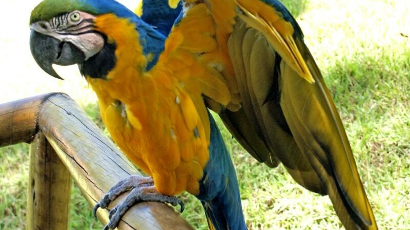 Papagal care tinea de sase traficantilor de droguri! L-au prins politistii