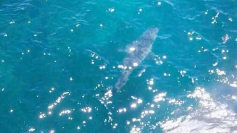 O plaja din Australia a fost evacuata dupa ce un rechin de 7 metri a aparut la mal.