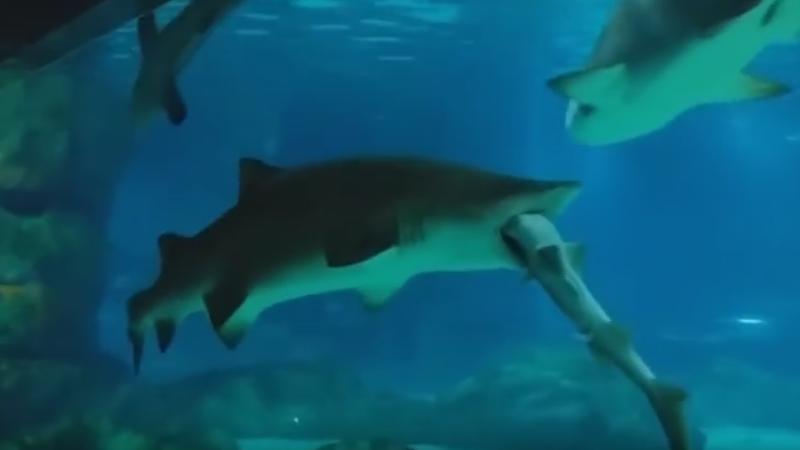 Deznodamantul unei lupte intre doi rechini, la acvariul din Seul. Scenele rare la care au asistat vizitatorii