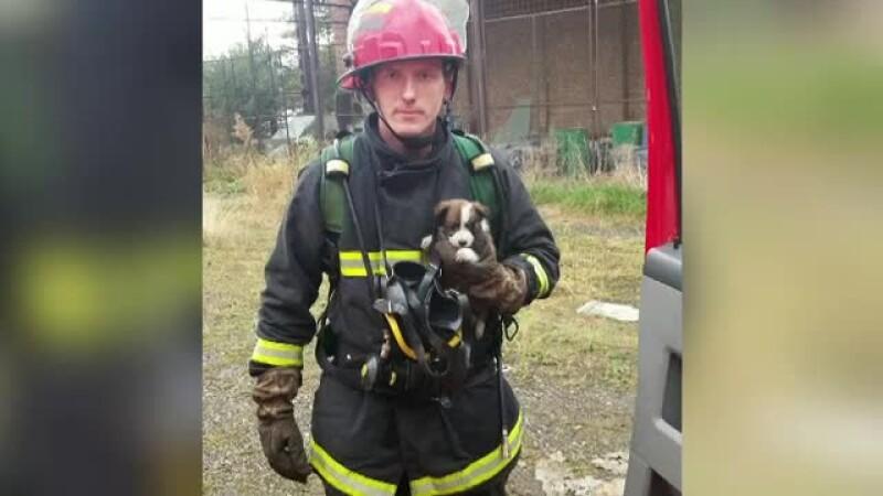 Un caine salvat dintr-un incendiu, de un pompier, a devenit mascota institutiei.