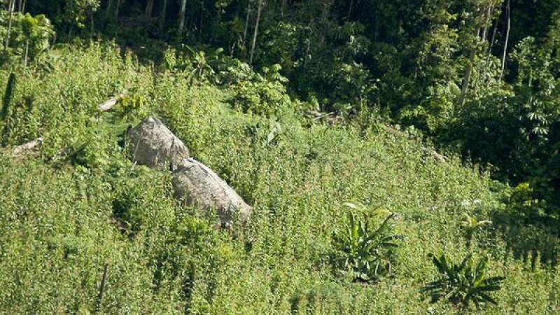 Ultimii oameni liberi de pe Terra. S-a mai descoperit un trib izolat in Amazon. Cum traiesc