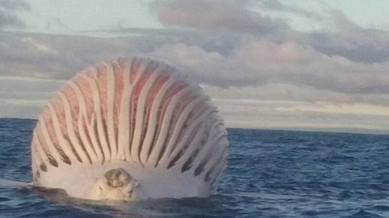 Un pescar din Australia a vazut in ocean un