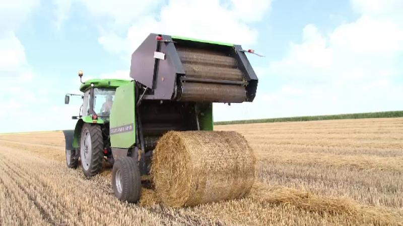 Marii cultivatori, nevoiti sa angajeze straini pe salarii de mii de euro. Localnicii prefera statul acasa si ajutorul social