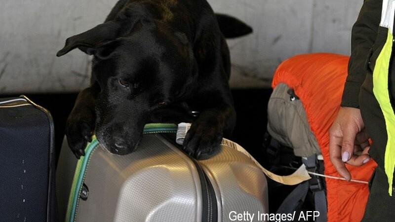 Sase caini-politisti au fost dresati sa gaseasca droguri, dar au descoperit branza si carnati. Suma uriasa platita pentru ei