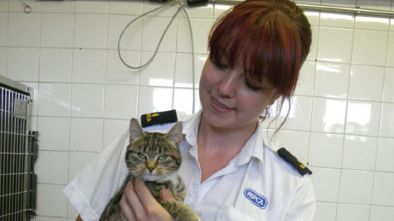 Cea mai norocoasa pisica: a scapat dupa ce a cazut de la 37 de metri