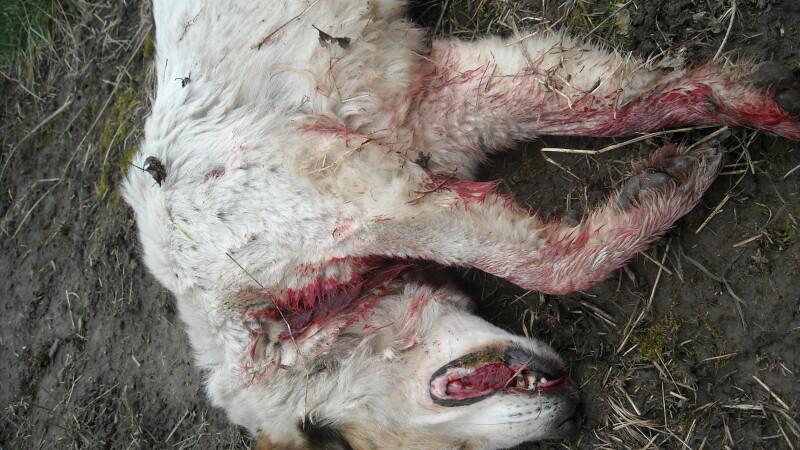 Ce faci cand vezi un animal maltratat? Afla chiar aici!