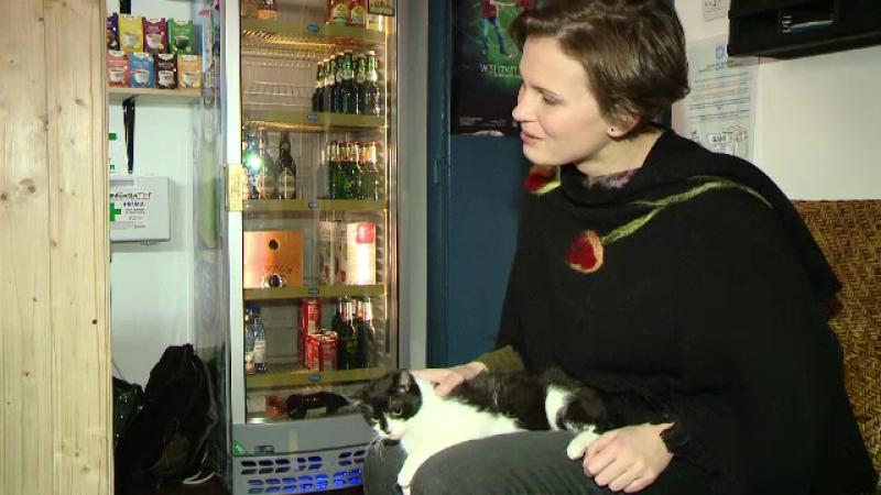Cafeneaua cu pisici din Timisoara, loc de refugiu pentru felinele in cautare de stapan.