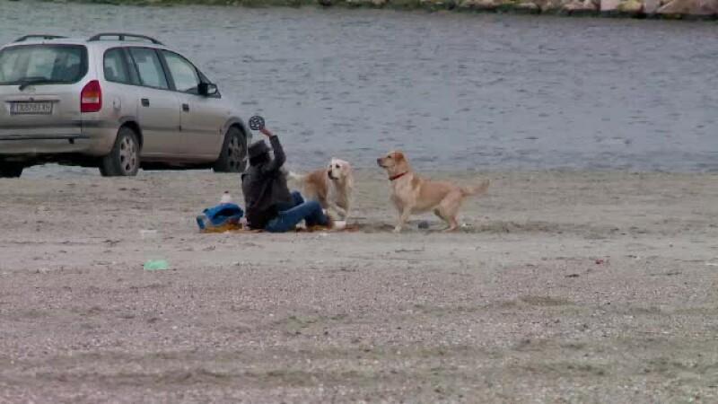 Amenda uriasa pe care o riscati daca mergeti cu cainele pe plajele din Romania. Iubitorii de animale sunt revoltati