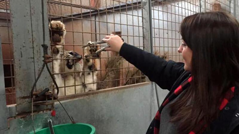 Animale care se mananca intre ele si ingrijitori ucisi de tigri, la un ZOO din Anglia. Autoritatile au dat o amenda