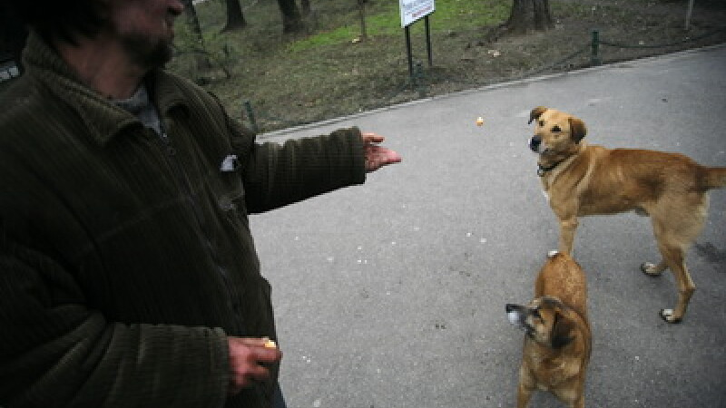 Sterilizari gratuite pentru cainii comunitari din Bucuresti. Afla mai multe