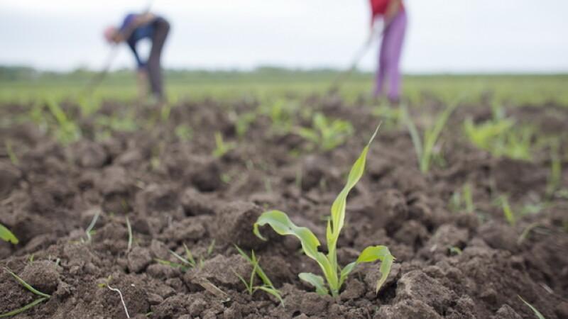 Vesti bune pentru tinerii fermieri. Cum se poate obtine finantarea de pana la 50.000 de euro