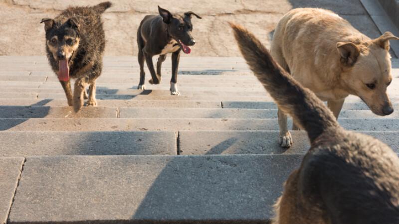 O turistă britanică a murit mușcată de câini, în timp ce se afla în vacanță în Grecia
