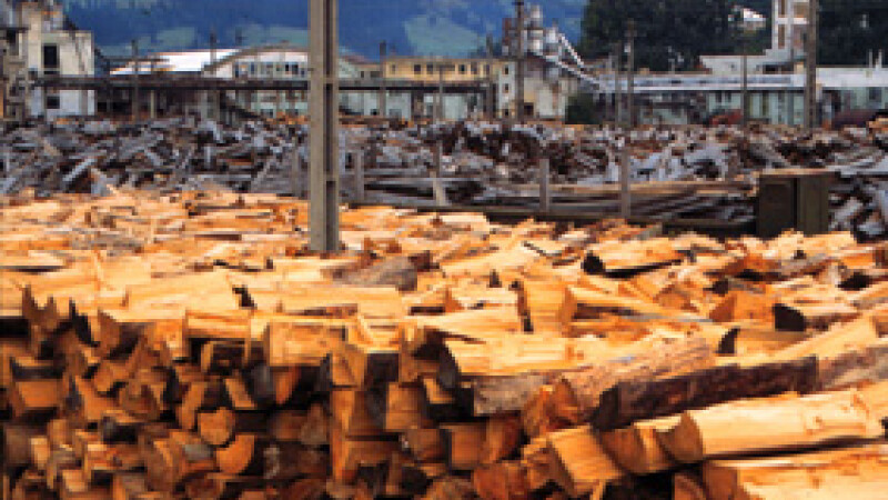30 de metri cubi de material lemnos confiscat de politistii clujeni