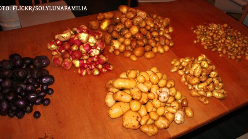 Satul unde un sac de 3 kilograme de cartofi costa aproape UN MILION de lei. Oamenii se inghesuie sa-i cumpere