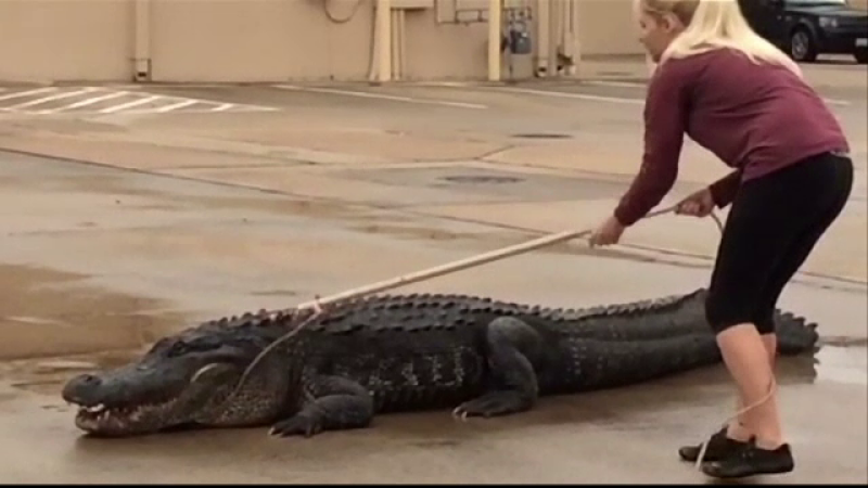 Pasiunea bizara a unei tinere din Texas. Este de profesie stomatolog, dar in timpul liber prefera sa prinda reptile