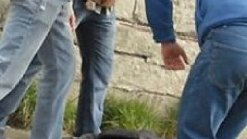 Incident cutremurator la Strehaia: Un copil si-a omorat in bataie un coleg