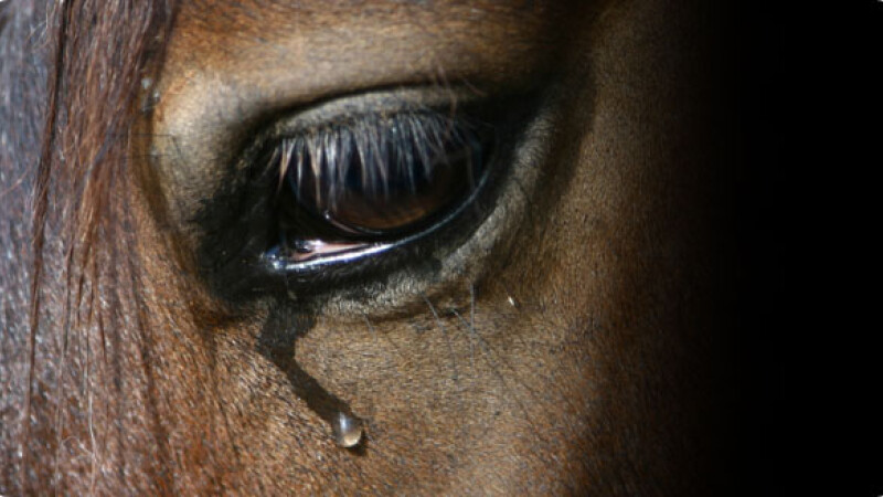 Calul maltratat din Ploiesti a fost salvat din mainile stapanului violent