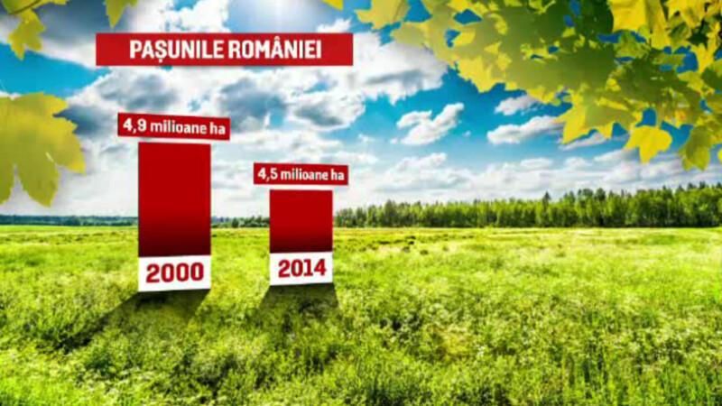 Subventiile de la UE ne lasa fara pasuni. Legile strambe si lacomia alesilor au distrus pajistile Romaniei