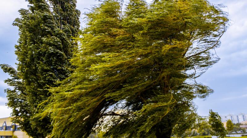 Vânt puternic