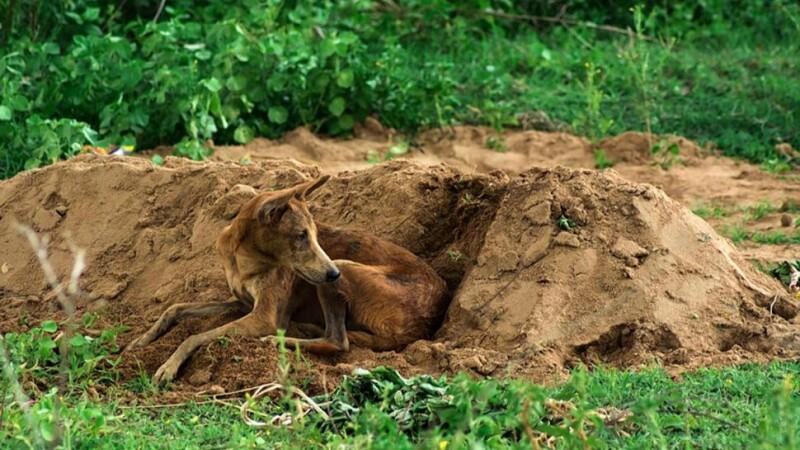 Un caine a stat 15 zile, fara mancare si apa, langa mormantul stapanului mort. Povestea impresionanta a lui Tommy