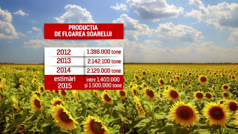 Seceta a afectat culturile de floarea soarelui: productia, la jumatate fata de anul trecut. Cu cat se poate scumpi uleiul