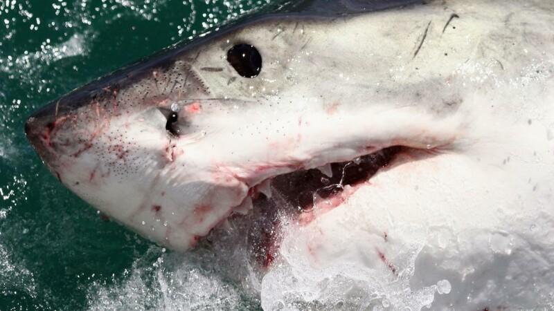Un rechin a smuls bratul unui turist brazilian in Fernando de Noronha. In ce stare este acum barbatul