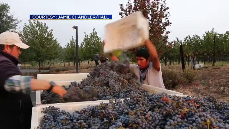 Vinul facut de roboti, in SUA. Americanii se lauda cu una dintre cele mai tehnologizate crame: