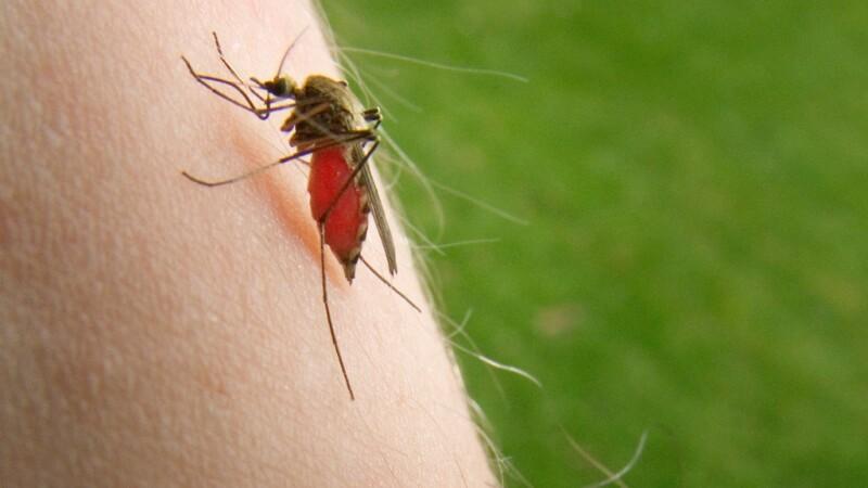 Donatorii de sânge, testaţi pentru virusul West Nile. Boala a ucis deja 6 români